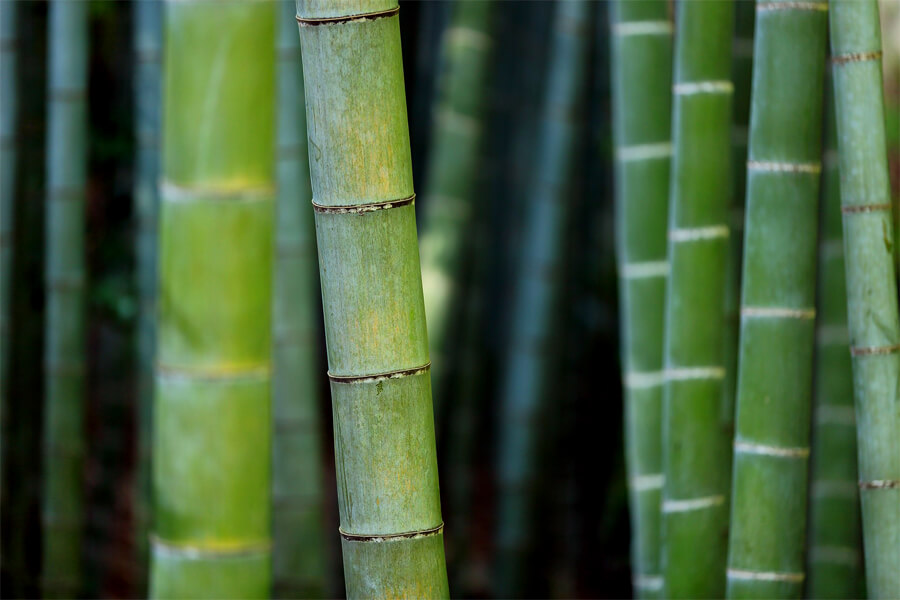 Learning People and Plants with Hawthorn Singapore: Bamboo
